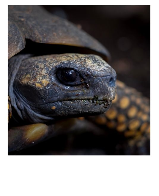 volontariat animaux Amazonie