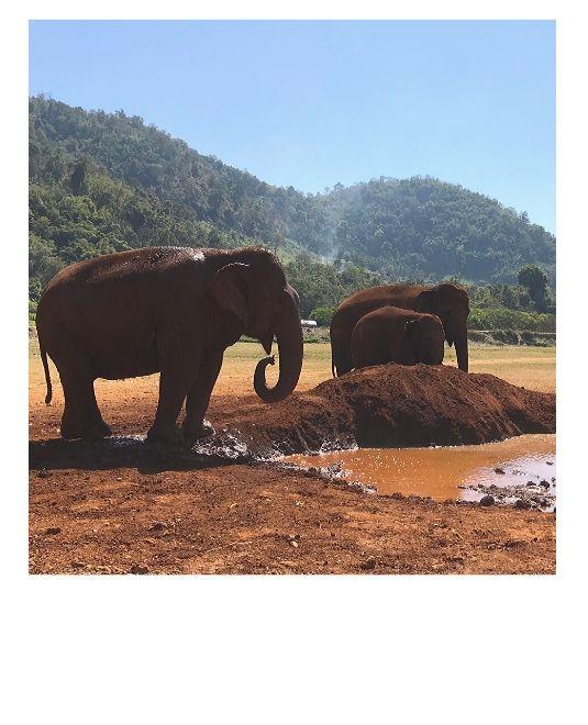 elephants au bord de l'eau en thailande
