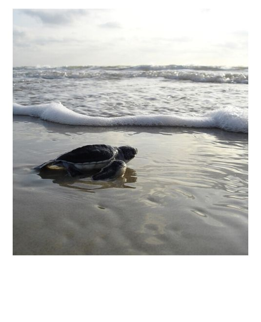 sauver tortue Costa Rica