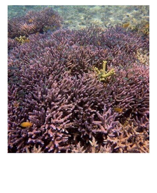 volontariat animaux marins coraux
