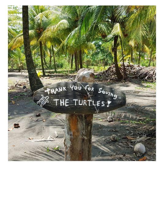Mahalo sauver les tortues