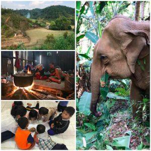 éco-tour pour l'éléphant de Thailande