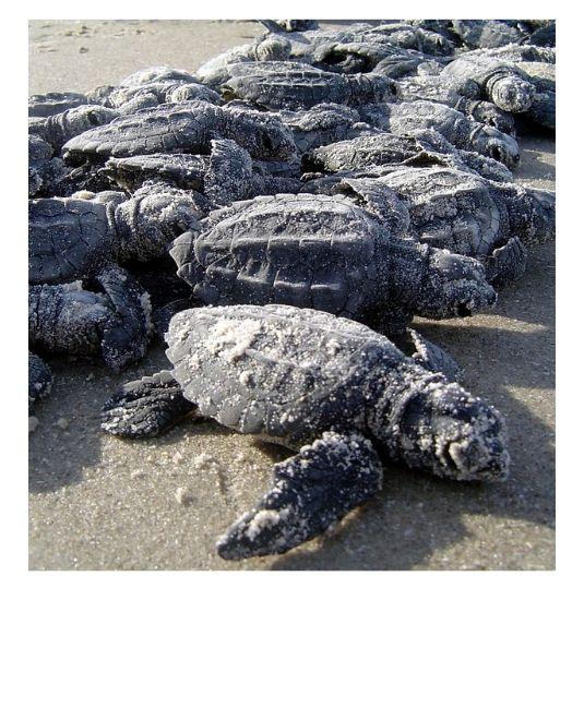 sauver les tortues Costa Rica