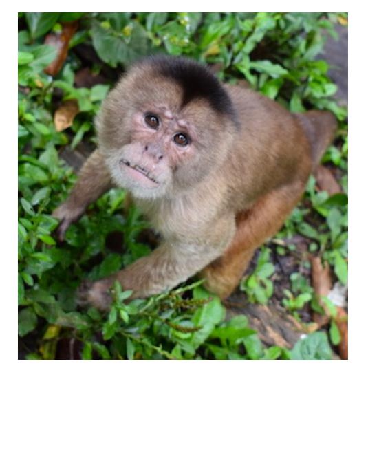 volontariat animaux Amérique du sud