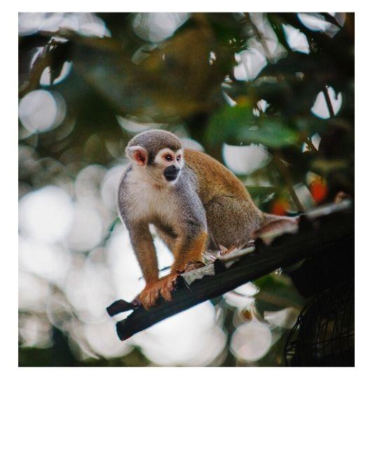 volontariat animaux singes