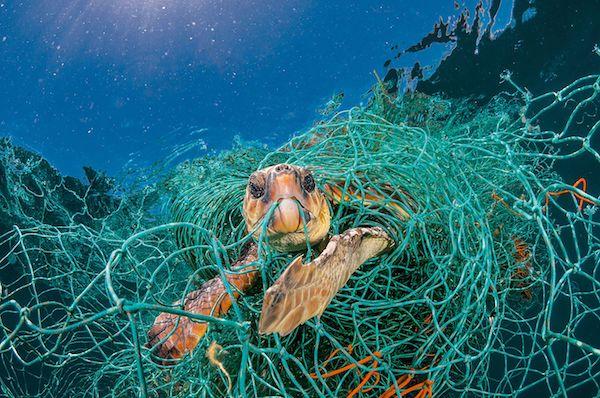 Aider les tortues de mer : menaces et solutions