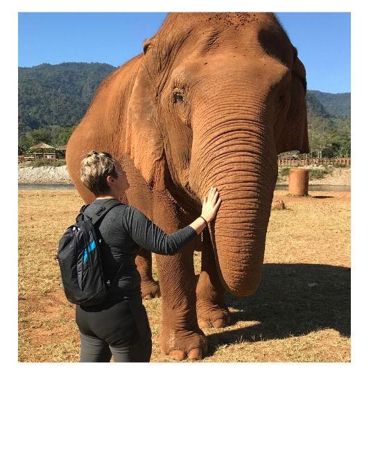 Toucher un éléphant Thailande
