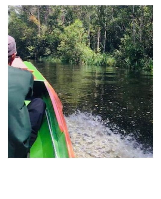 mission ecovolontariat Bornéo
