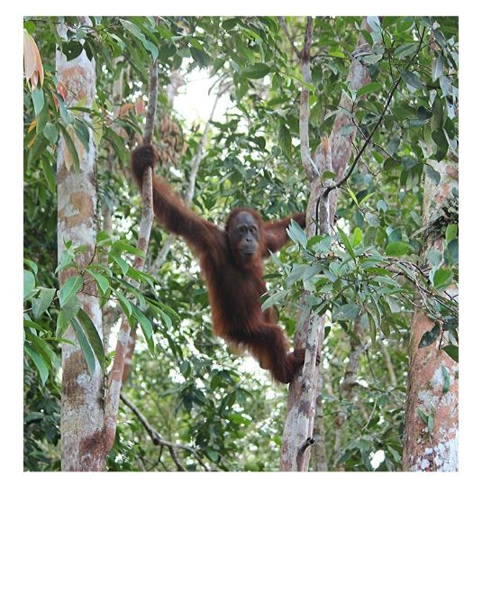 mission ecovolontariat orang outans