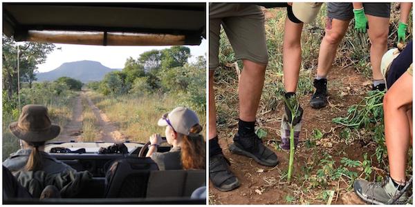 volontariat safari Afrique du Sud