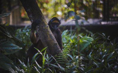 Pourquoi choisir un écovolontariat pour les animaux en Équateur