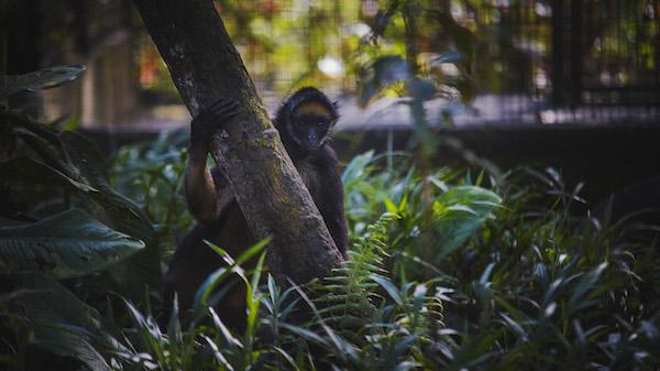 pourquoi écovolontariat animaux Équateur