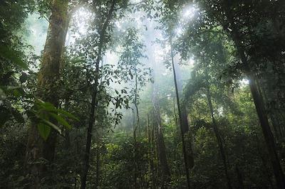écovolontariat animaux en Amazonie