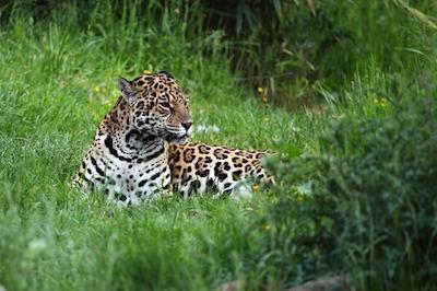 Écovolontariat animaux sauvages Equateur